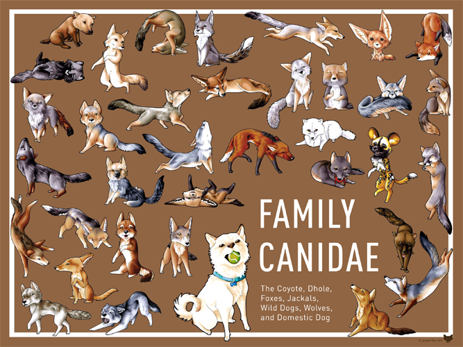 Family Canidae Product Designs by Nathalie Garfinkle | PaperFox: paperfox.net/design_canidae.html